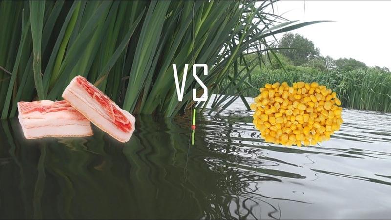 Рыбалка на поплавок в мае САЛО против КУКУРУЗЫ.