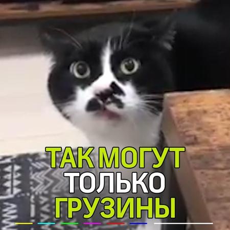 """Маленькие Большие НОВОСТИ on Instagram: """"В Сети становится вирусным видео с котиком, который знает грузинские песни. 💂Оно и понятно, ведь так душев..."""