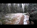Снайпер на охоте Лес Мужик и Стая Кабанов.охота на кабана прикол wild boar hunting
