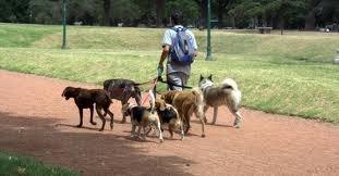 Выгул собак всех пород обучение