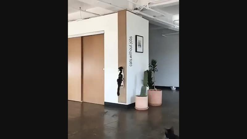 Пока никто не видит кот переключает вектор гравитации и попадает туда куда ему нужно