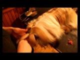 Grooming Shih Tzu (Гордый Кай Возвращение в Эдем).mp4
