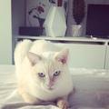 Instagram Актёр Маффин , Дубляж @t.o.m.u.s.y.a.k ( actor Maffin , voice Valentine Tomusyak)