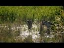 Амур Амазонка Азии 2 Чёрный Дракон Документальный природа животные 2015