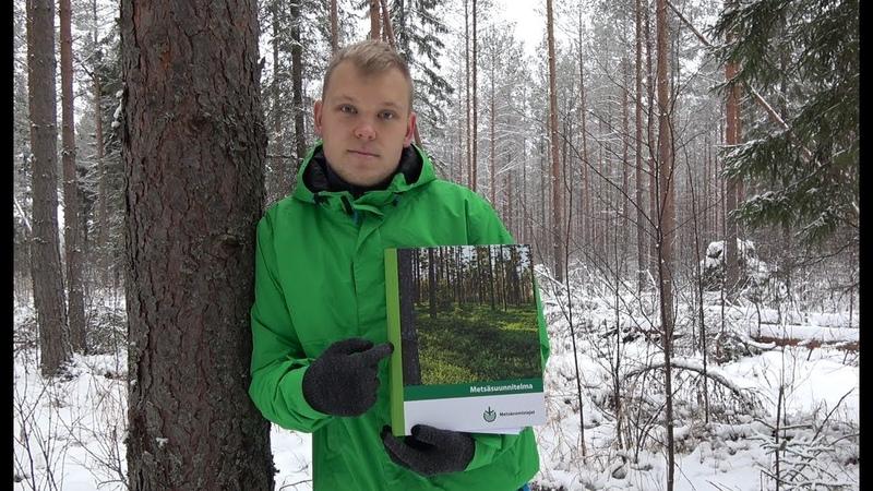 Купил лес в Финляндии. 33 ГЕКТАРА своей ЗЕМЛИ.