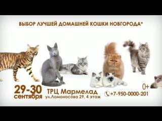 Выставка кошек 29-30 сентября
