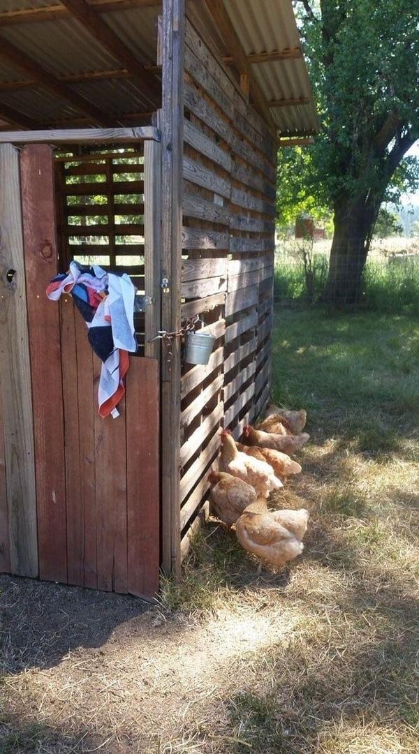 Моя коза рожает. Курицы проявили сочувствие и поддержку))
