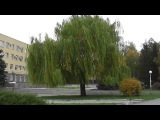 Красноград: осень - 2013