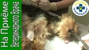 У собаки застряла кость в пищеводе. Извлекли кость и спасли собачку
