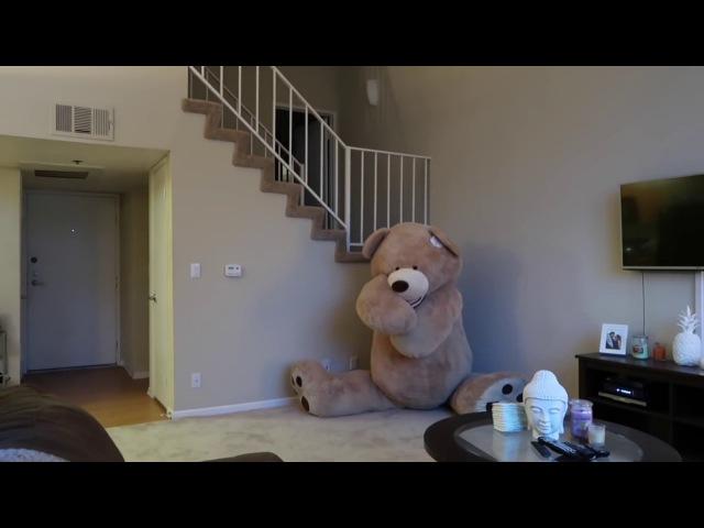 Broma del oso de peluche