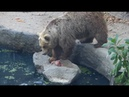 Bear Saves Bird From Drowning