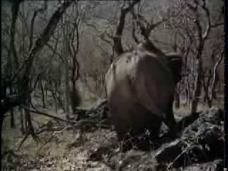 Дхармендра,Хема Малини-фильм Король джунглей(1976г)(480р)