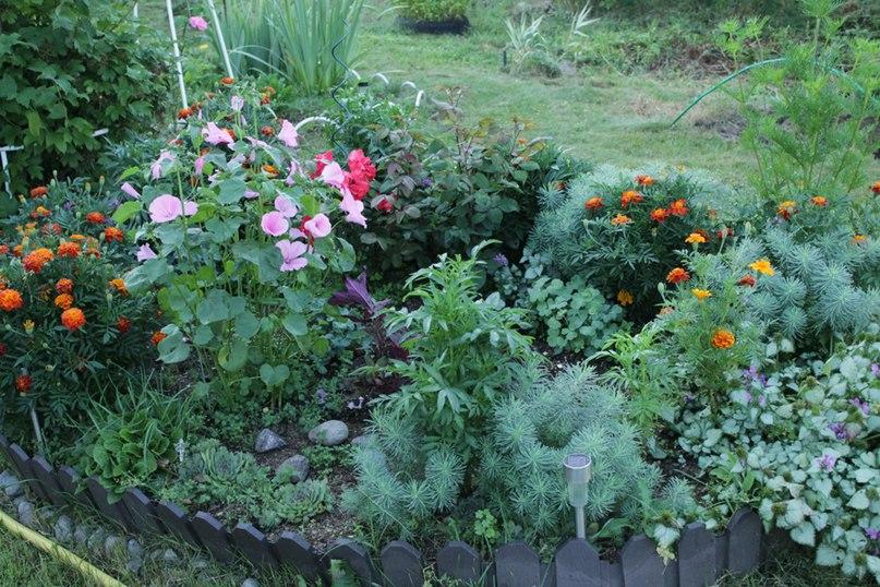 Какие растения сажать на даче в августе 9