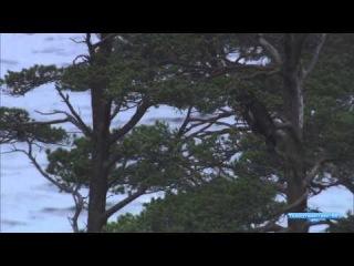 BBC Мир природы. Тайны Шотландских Гор