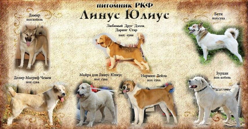 фото азиаты собаки