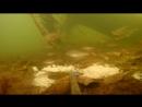 Необычные добавки в прикормку Подводная съемка