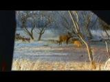 AMAIZING Hog Boar Hunting using a Hunter Extreme Air Rifle - Caccia al cinghiale