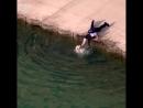 Офицер спасает утопающую собаку трогательно