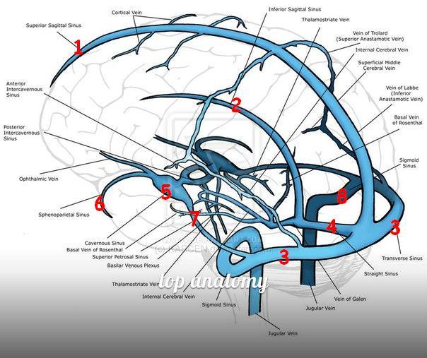 Sinus sphenoparietalis || Med-koM