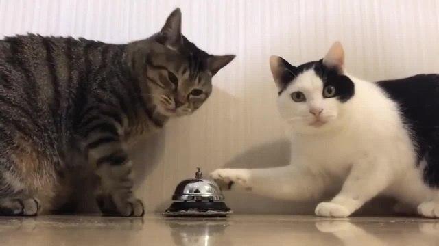 Prodigy Cat Omen