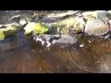 Котик гоняется за рыбками