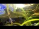 Документальный фильм о рыбка в муз школе
