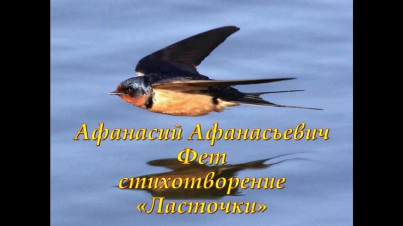 Страна читающая — Сергей Кузнецов читает произведение «Ласточки» А. А. Фета