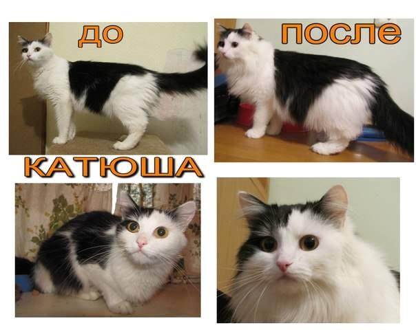До и после. Катюша