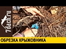 Обрезка крыжовника - 7 дач