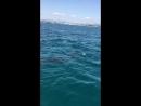 Тунис.Дельфины в открытом море.