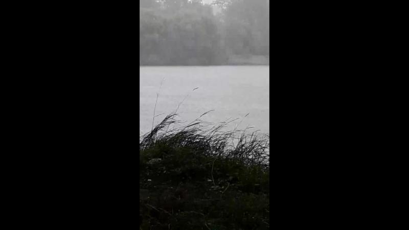 прячусь от дождя под деревом