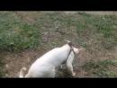 Марина Ладушка и её кот Девонрекс Devon Rex на прогулке.wmv