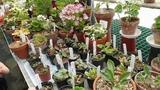 VIP visit &amp Greenhouse in May