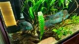 Аквариумный светильник - апгрейд. Aquarium lamp - upgrade.