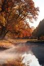 А все-таки осень хороша. Как красиво падает лист! Вот он оторвался, в