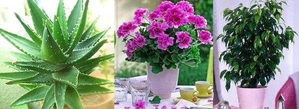 Как вернуть к жизни комнатные цветы. Нашла эту статью в дневниках в живом журнале, может быть кому нибудь пригодится. Погибал комнатный цветок на глазах и шансов на спасение все было меньше и меньше. И тогда я вспомнила совет, который давно получила от увлеченного цветовода. Все больные и плохо развивающиеся растения поливать следующим раствором:5-6 яичных белков залить 1 л теплой воды и настаивать неделю. Затем развести 10 л воды. Полила этим чудо-раствором не только погибающий цветок, но и…