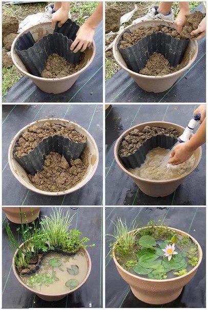 Как сделать контейнерный водный сад своими руками.