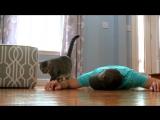 Хозяин притворился , что бы узнать как Кошка отреагирует ...