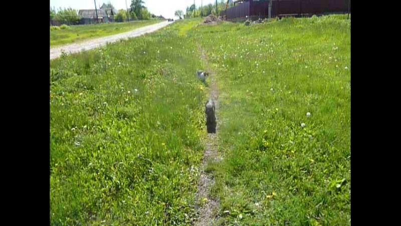 мои кошки в деревне