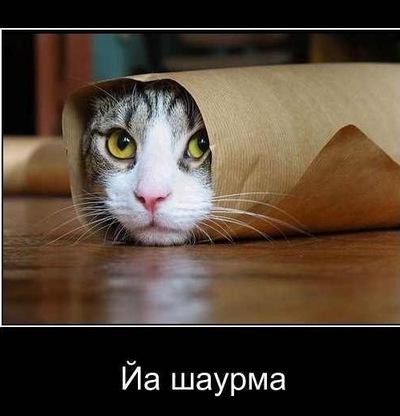 Паша Ляпунов, 12 апреля , Санкт-Петербург, id90341147