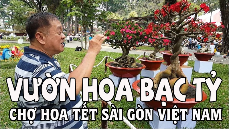 Ngắm Vườn Hoa Sứ bạc tỷ chợ Hoa Tết Tao Đàn | Đưa Việt Kiều Mỹ về Sài Gòn chơi chợ Tết Vietnam 2018