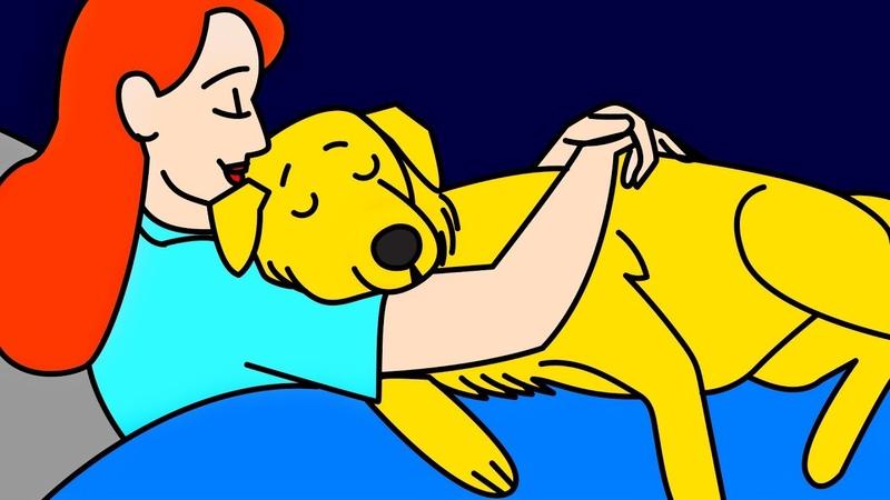 11 Собачьих Способов Сказать Я Люблю Тебя