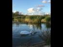 Озеро на Куршской косе