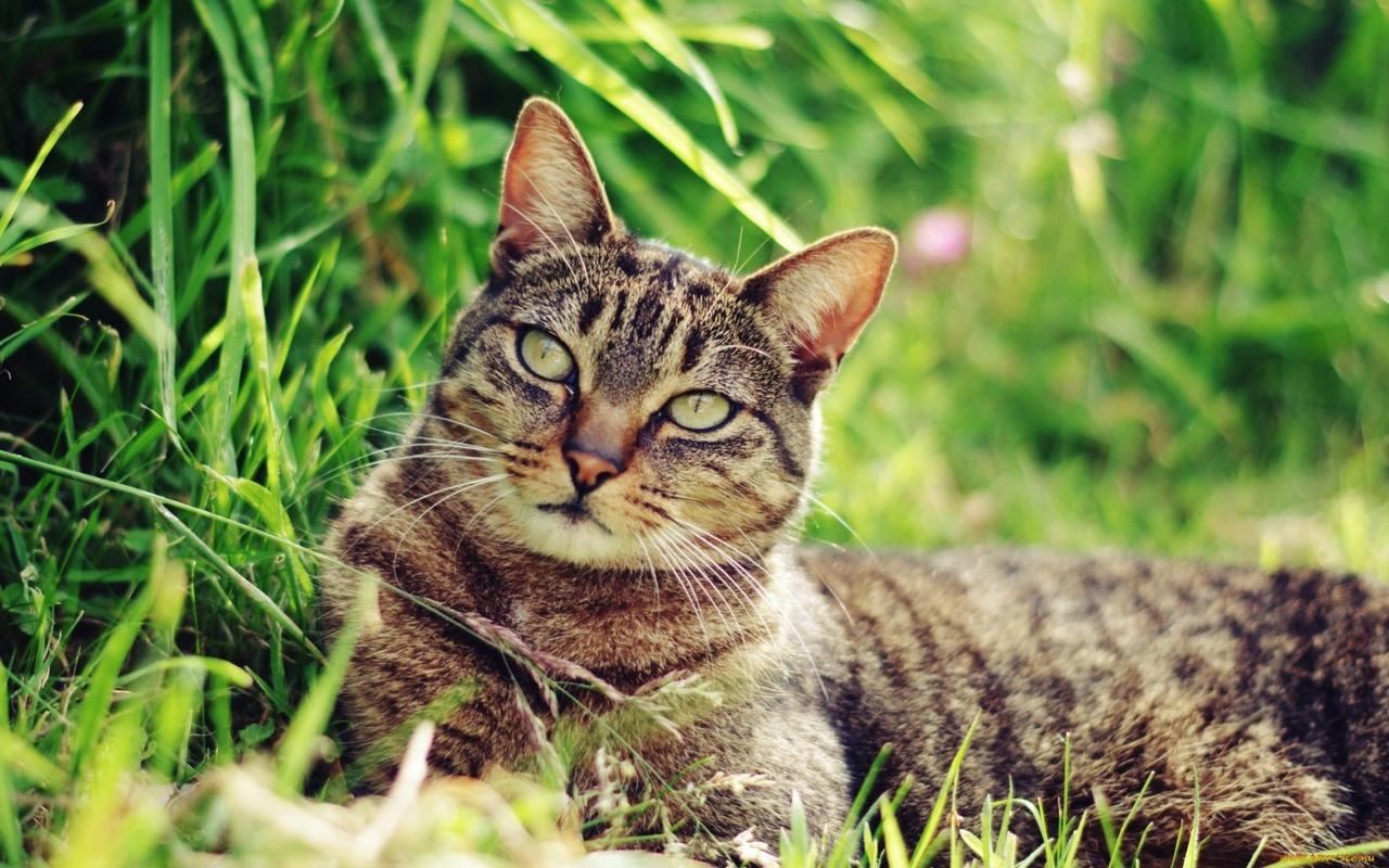 ПОСЛЕДНИЙ ДРУГБездомный котяра отнюдь не был тощим...