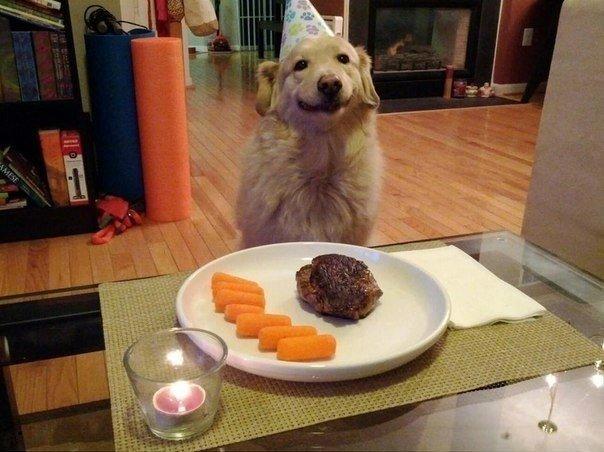 """""""Устроил сюрприз на день рождения своего пса. Никогда еще не видел его столь счастливым"""""""
