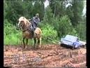 Лошадь вытаскивает машину
