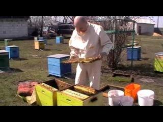 Михалев А.В. Пчеловодство.Пересаживаем пчел после зимовки.19мин