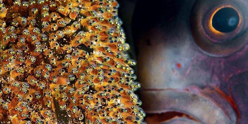 (Рыбёшки и рыбина) Фото: Филипп Моэс