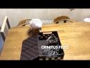 FURIOUS SPARROWS vs CRINITUS FELES