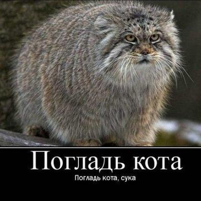 Бешеный Водила, 6 апреля , Донецк, id209149312